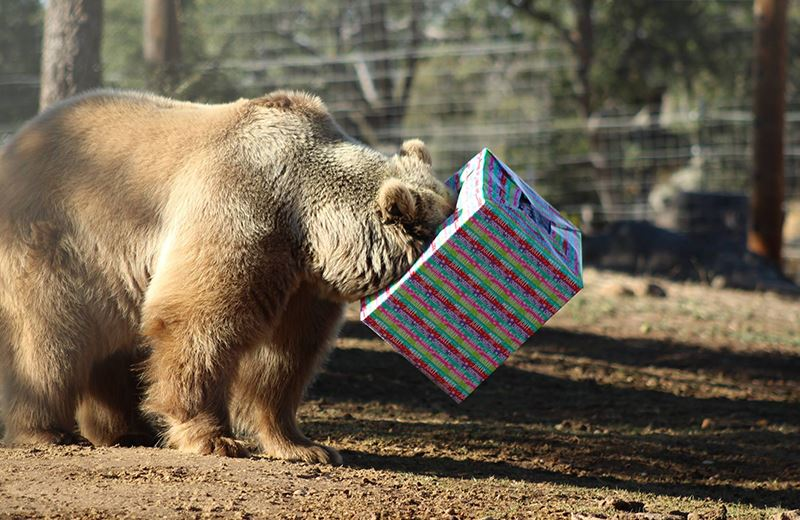 christmas fundraiser at lions tigers and bears sanctuary california 4th