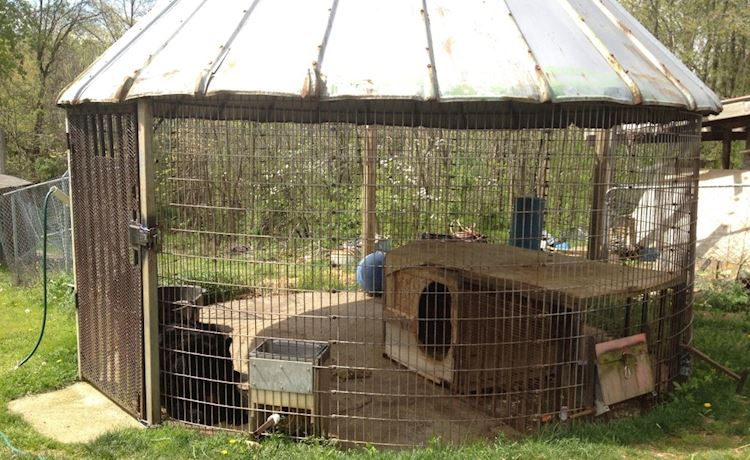 Sugar Bear lived in this corn-crib before being rescued by Lions Tigers & Bears.