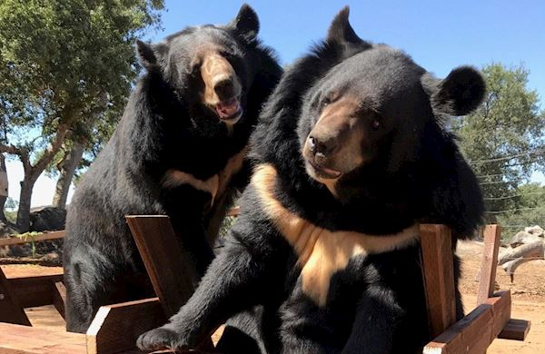 Employer Matching at Lions Tigers & Bears Sanctuary, California
