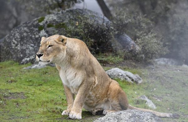 Planned Giving at Lions Tigers & Bears Sanctuary, California
