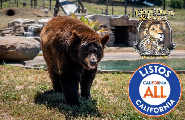 listos california lions tigers and bears