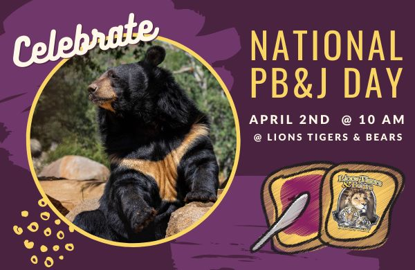 national peanut butter and jelly day lions tigers and bears