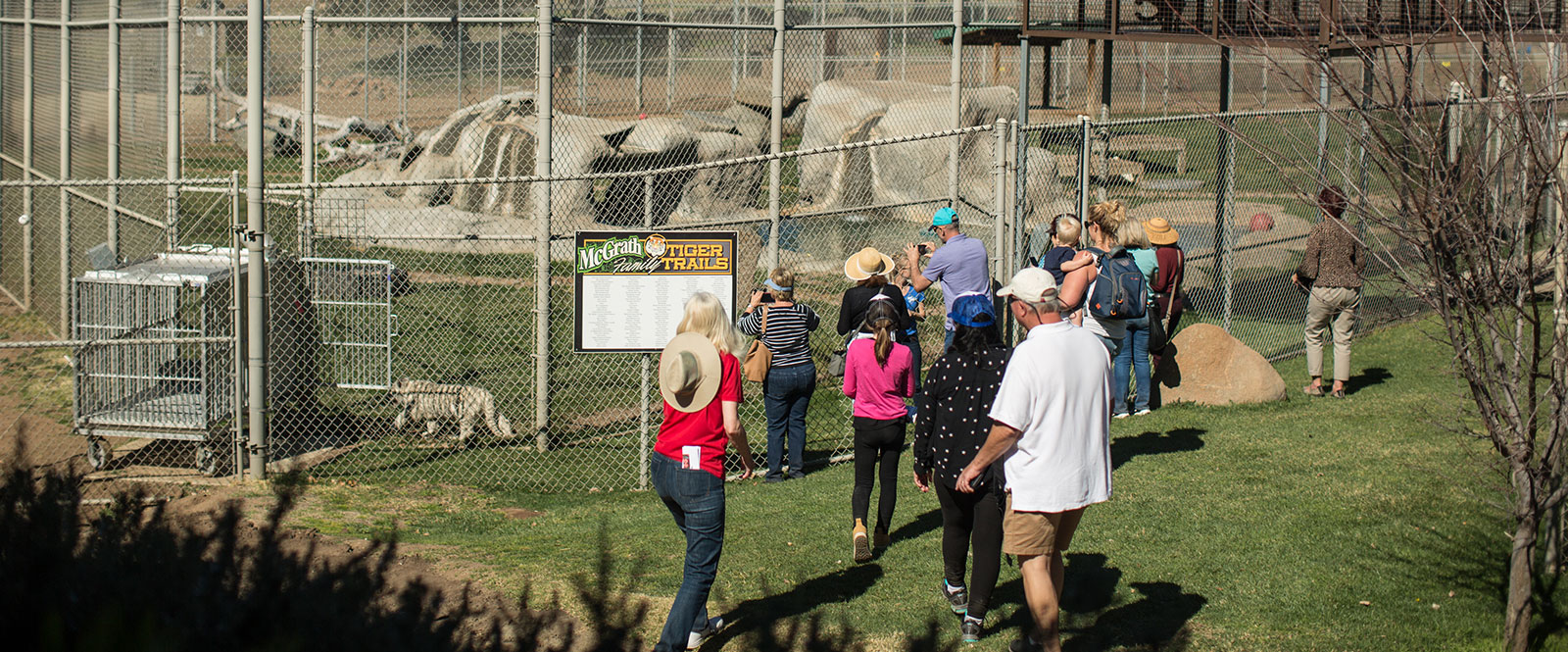 Group Visits at Lions Tigers & Bears, Alpine