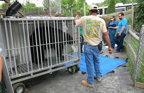 New York Bear Rescue