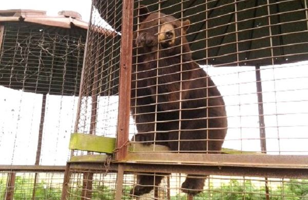 Ohio Bear Rescue