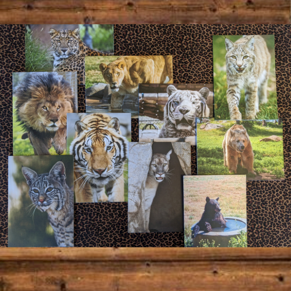 4-Pack Greeting Cards